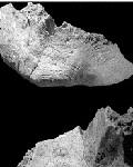 Обнаружен, возможно, первый гибрид человека и неандертальца