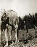 Где родина слонов? Про историю и псевдоисторию